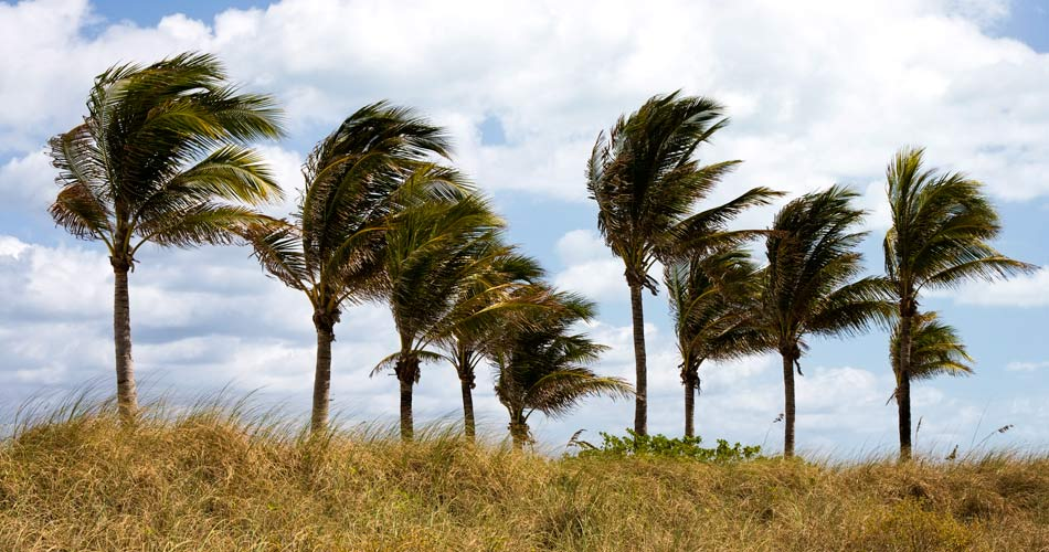 Wind Mitigation Home Inspection Services